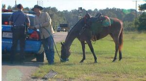 man-rides-horse-avoid-dwi