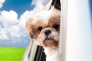 crazy-dui-stories-dog-driving