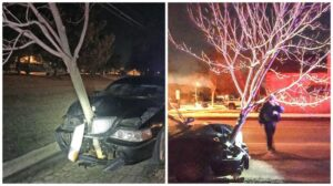 drunk driver drives with tree in grill of car